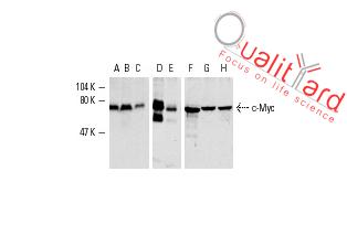 c-Myc Antibody (9E10)