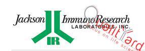 Peroxidase-AffiniPure Goat Anti-Rabbit IgG (H+L)