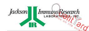 Rhodamine (TRITC)-AffiniPure Donkey Anti-Rabbit IgG (H+L) (min X Bov,Ck,Gt,GP,Sy Hms,Hrs,Hu,Ms,Rat,Shp Sr Prot)