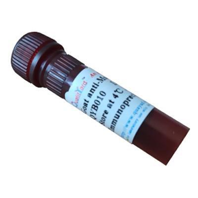 Goat anti-Mouse IgG-Biotin